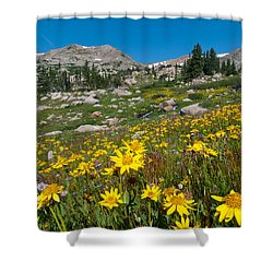 Shower Curtain featuring the photograph Indian Peaks Summer Wildflowers by Cascade Colors