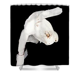 Shower Curtain featuring the photograph Indian Pipe Head by Meta Gatschenberger