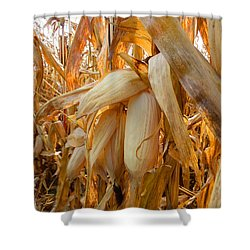 Indiana Corn 3 Shower Curtain