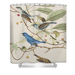 Indigo Bird Shower Curtain by John James Audubon