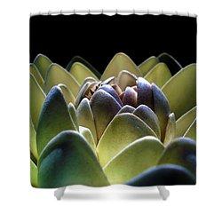 Indonesian White Lotus Shower Curtain