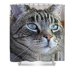 Indy Sq. Shower Curtain