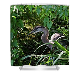 Injure Blue Heron Shower Curtain by Donna Brown