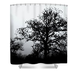 Ink And Photo Study Of Live Oaks Shower Curtain