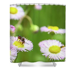 Inl-2 Shower Curtain