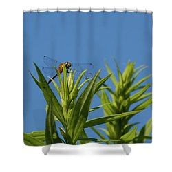 Inl-6 Shower Curtain