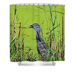 Inmature Black Crowned Heron. Shower Curtain