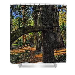 Shower Curtain featuring the photograph Inosculation Tree by Joseph Hollingsworth