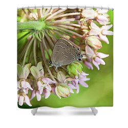 Inp-1 Shower Curtain