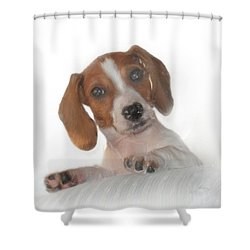 Shower Curtain featuring the photograph Inquisitive Dachshund by David and Carol Kelly