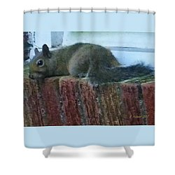 Shower Curtain featuring the photograph Inquisitor Visitor by Denise Fulmer