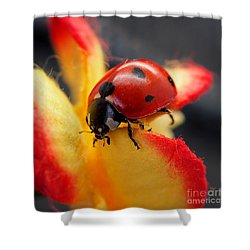 Insect Ladybug On A Paper Flower Shower Curtain