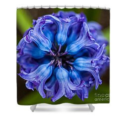 Inside A Hyacinth Bloom Shower Curtain by Michelle Wiarda