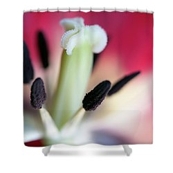 Inside A Tulip Shower Curtain by Deborah Scannell
