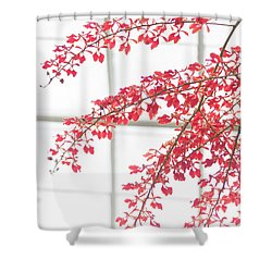 Shower Curtain featuring the photograph Inside The Greenhouse by Ana V Ramirez