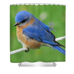 Intense Blue Bird Shower Curtain