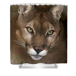 Intense Cougar Shower Curtain