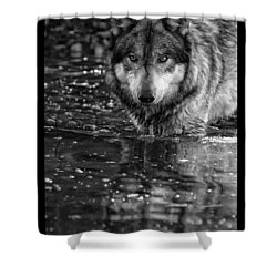 Shower Curtain featuring the photograph Intense Reflection by Shari Jardina