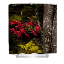 Shower Curtain featuring the photograph Intensity by Chad Dutson