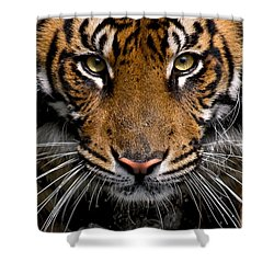 Shower Curtain featuring the photograph Intensity by Cheri McEachin