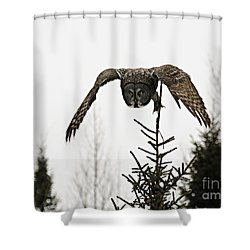 Shower Curtain featuring the photograph Intent On His Prey by Larry Ricker