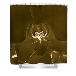 Interiors #2 Shower Curtain by William Feig