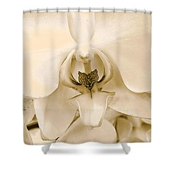 Interiors Shower Curtain by William Feig
