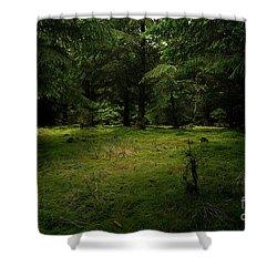 Internationaler Tag Des Waldes - International Day Of Forests - Wood Glade In The Urft Valley Shower Curtain
