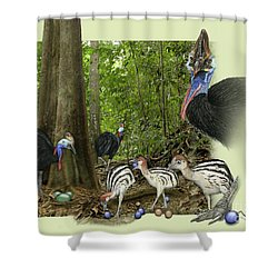 Zoo Nature Interpretation Panel Cassowaries Blue Quandong Shower Curtain