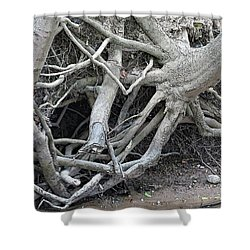 Intertwined Shower Curtain by Sandra Church