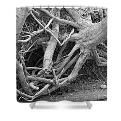 Intertwined Bw Shower Curtain by Sandra Church