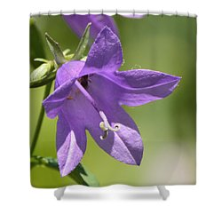 Shower Curtain featuring the photograph Intimate Bellflower  by Lyle Crump