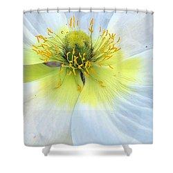 Intimate Light Shower Curtain