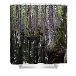 Into The Cypress Swamp Shower Curtain