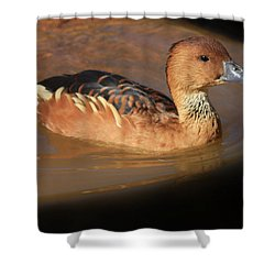 Shower Curtain featuring the photograph Into The Darkness  by Kim Henderson