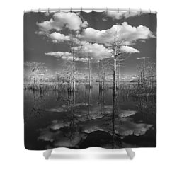 Into The Everglades Shower Curtain by Debra and Dave Vanderlaan