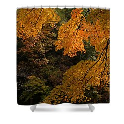 Into The Fall Shower Curtain