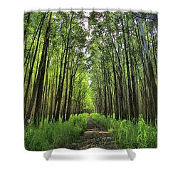 Shower Curtain featuring the photograph Into The Forest by DJ Florek