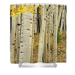 Shower Curtain featuring the photograph Into The Forest by Gary Lengyel
