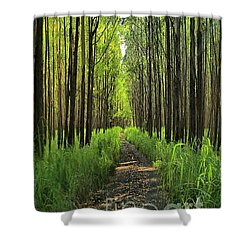 Shower Curtain featuring the photograph Into The Forest I Go by DJ Florek