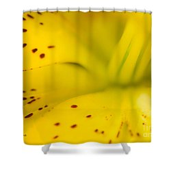 Into The Light Shower Curtain by Michelle Wiarda