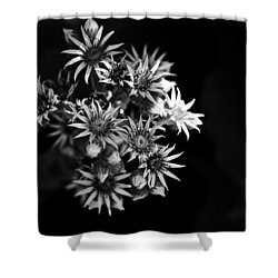 Shower Curtain featuring the photograph Into The Light by Silke Brubaker