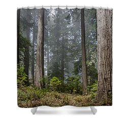 Into The Redwood Forest Shower Curtain