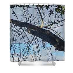 Tree Leaves Into The Sky Shower Curtain