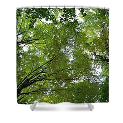 Shower Curtain featuring the photograph Into The Trees by Michael  TMAD Finney
