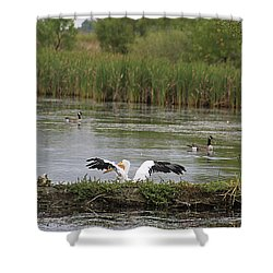 Shower Curtain featuring the photograph Into The Water by Alyce Taylor