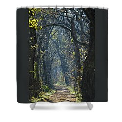Into The Wood Shower Curtain