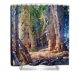 Into The Woods Again Shower Curtain