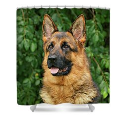 Shower Curtain featuring the photograph Intriguing Ida by Sandy Keeton