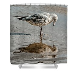 Introspective Gull Shower Curtain
